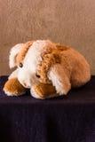 Still life Cute dog brown doll Stock Image