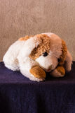 Still life Cute dog brown doll Stock Images
