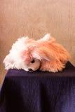 Still life Cute pink dog brown doll Stock Photos