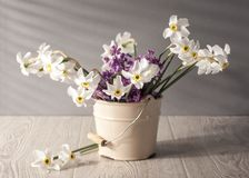 Still life with daffodils Royalty Free Stock Photo