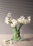 Still life with daffodils Stock Image