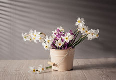Still life with daffodils Royalty Free Stock Photography