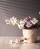 Still life with daffodils Royalty Free Stock Photos