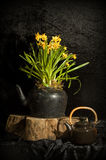 Still life with daffodils and teapot. On background Royalty Free Stock Photography