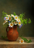 Still life with daisies stock images