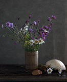 Still life with daisies Royalty Free Stock Photography