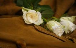 still_life de plan rapproché de fond de bouquet de roses Image libre de droits