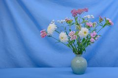 Still life- flower bouquet. Still life decorative- flower beautiful bouquet. Drapery background Royalty Free Stock Photos
