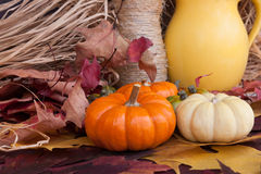 Still life with decorative pumpkins. Autumn themee with decorative pumpkins Royalty Free Stock Image