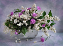 Still life with Deutzia and carnations Royalty Free Stock Image