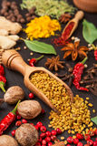 Still life with different spices and herbs Stock Photo