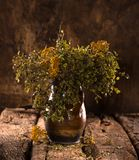 Still life with dried blueberry and tansy branches Stock Photography
