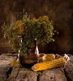Still life with dried corn, blueberry and tansy branches Royalty Free Stock Photography