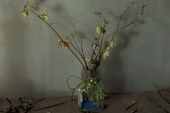 Still life with dry flowers in a glass vase Royalty Free Stock Photography