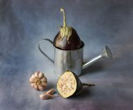 Still life of eggplant with garlic and canned watering can stock images