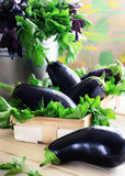 Still life with eggplants Royalty Free Stock Photos