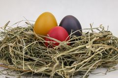 Still life of eggs, Easter eggs on the dry grass stock images