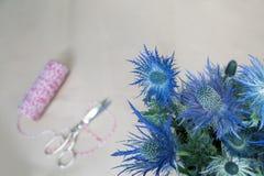 Still life of Eryngium planum Blue Sea Holly flowers on light br Stock Photos