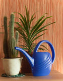 Still life of ficus and cactus royalty free stock image