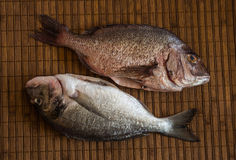 Still Life with Fish stock photo
