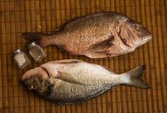 Still life with fish royalty free stock photo