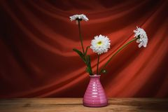 Still life- flower bouquet. Still life decorative- flower beautiful bouquet. Drapery background Royalty Free Stock Images