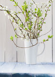 Still Life flowering branches vase Stock Photography