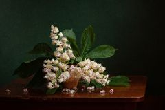 Still life with flowering chestnut tree Stock Photos