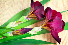 Still life: flowering irises on the table surface. Royalty Free Stock Photo
