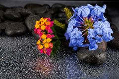Still life with flowers and black stones.  Stock Photography