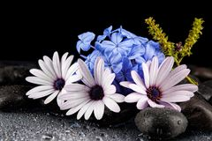 Still life with flowers and black stones.  Stock Photo