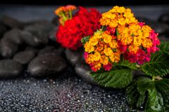 Still life with flowers and black stones.  Stock Photos