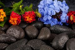 Still life with flowers and black stones.  Royalty Free Stock Photography