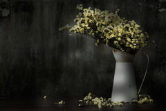 Still Life & Flowers drop by sunlight long time Stock Photo