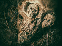 Still life with four skull face in bird nest. Stock Images