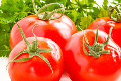 Still life with four tomatoes and parsley close up Royalty Free Stock Image