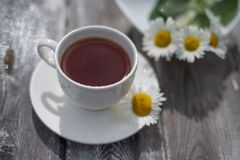 Tea in a white cup on a wooden table. Daisies on the table royalty free stock image