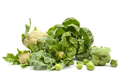 Still life of fresh cabbage Stock Image