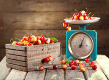 Still life with fresh cherries Royalty Free Stock Photo