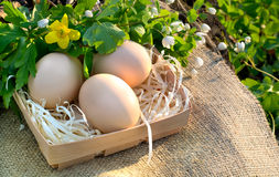 Still life of fresh chicken eggs and spring flowers on a tablecl. Oth of burlap in the open air Stock Image