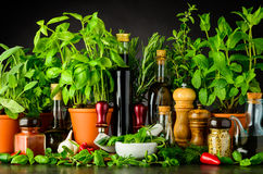 Still Life with Fresh Cooking Ingredients and Herbs. Sill Life with Cooking Ingredients, Fresh Green Basil and Parsley Herbs, Pestle and Mortar with Mezzaluna Stock Photography