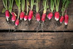 Still life fresh radish vegetables crop background on wood. Still life fresh radish vegetables harvest crop background on wood Royalty Free Stock Images