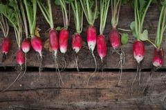 Still life fresh radish vegetables crop background on wood. Still life fresh radish vegetables harvest crop background on wood Stock Photos
