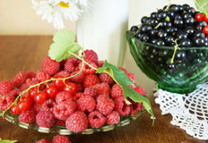 Still life with fresh ripe black currant and raspberry Stock Photography