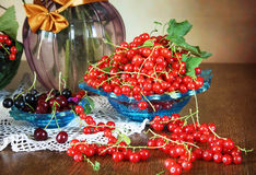 Still life with fresh ripe red currant Royalty Free Stock Photo