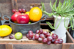Still life of fruit  and  succulents  on vintage wood background Royalty Free Stock Photos