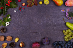 Still Life with fruits and strawberries - apples, plums, grape, pears, leaves, pine cones, figs, flowers, chestnuts. Top view. Rus Royalty Free Stock Photo