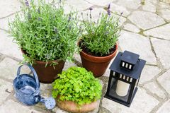 Still life in a garden Royalty Free Stock Photography