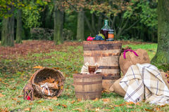 Still life in the garden autumn royalty free stock images