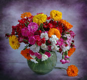 Still life with garden carnations and calendula Stock Images